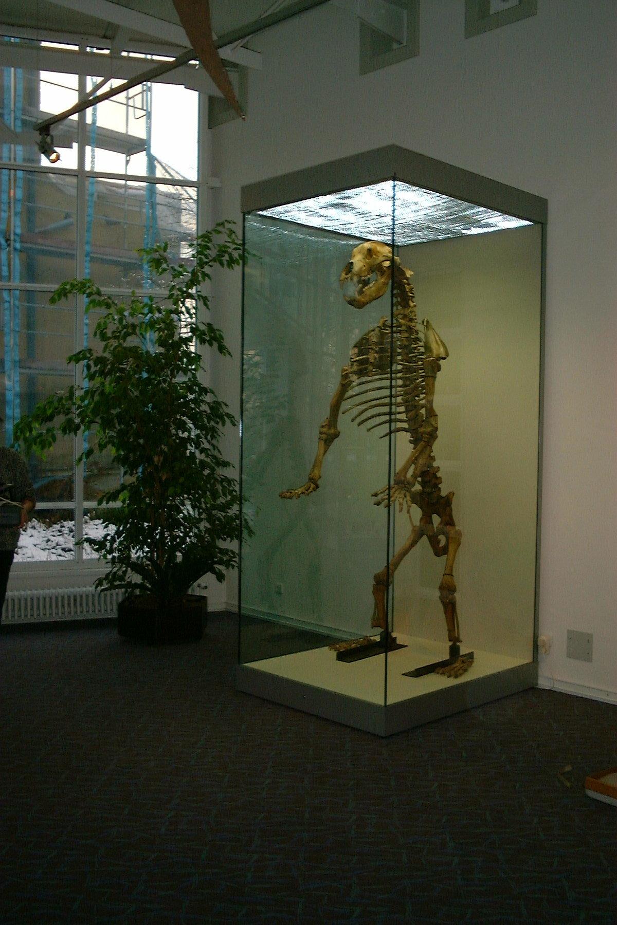 Fossil Montage Original Hoehlenbaer