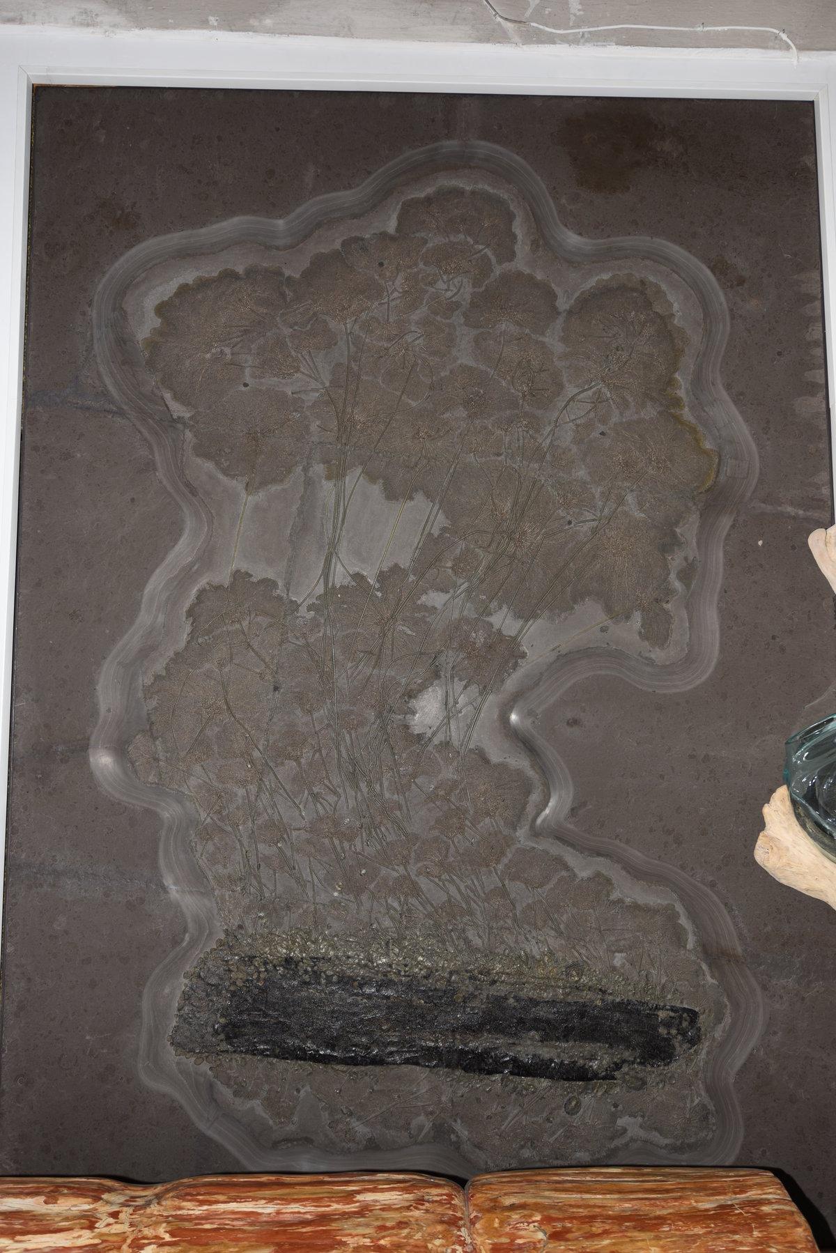 Fossil Crinoiden