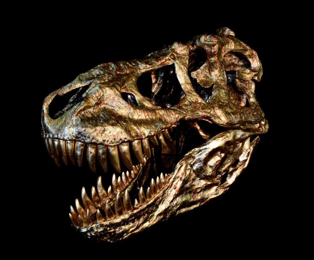 Fossils Art replika